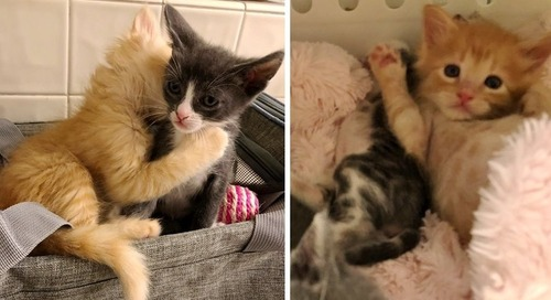 Kitten Who Was Found As Orphan, Gives Other Kitties Cuddles So No One Feels Alone