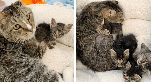 Cat Takes Kittens Under His Wing After They were Found Living in Parking Lot