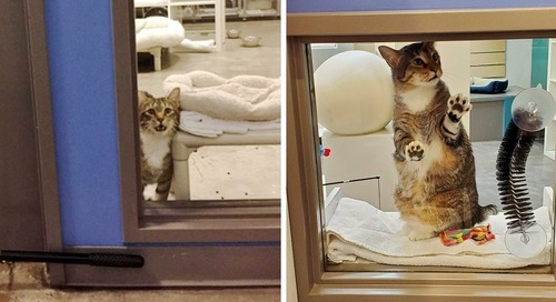Cat Insists on Opening Door and Letting Other Cats Escape at Shelter