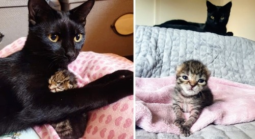Cat Helps Care for Orphaned Kitten Who Was Rescued from Similar Beginning