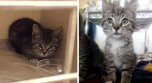 Rescuers Find Stray Kitten With Unexpected Help from a Raccoon