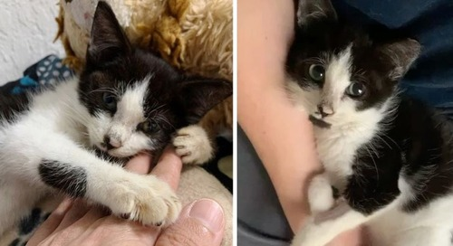 Kitten Finds Warm Lap and Won't Let Go After Being Rescued from Street Life