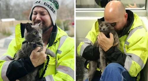 Truck Driver Breaks into Tears When His Cat Returns to Him After Months of Searching