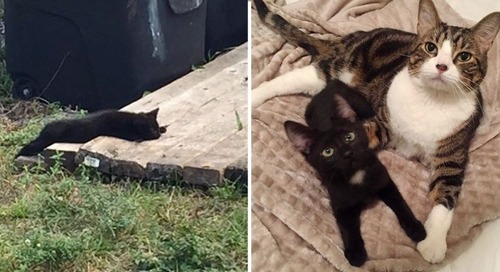 Kitten Rescued from Stray Life, Finds a Friend She Always Wanted