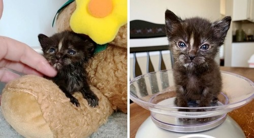 Rescuers Found Pint-sized Kitten Under Tree Branches and Turned Her Life Around