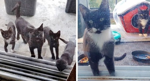 Cat Brings Her Kittens to a Family that Was Kind to Her, and Asks for Help