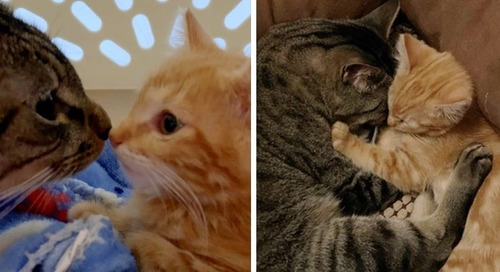 Cat Cuddles Shy Kitten After He Was Found Wandering the Streets Alone