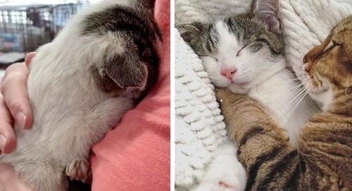 Shy Kitten Who Was Found On a Porch, Finds Family He Always Wanted