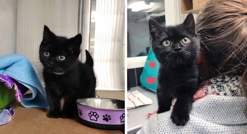 Family Gives Kitten with Fragile Heart the Wish He's Been Waiting for