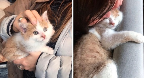 Kitten Finds Family He Always Wanted After He Was Rescued from Life on the Street