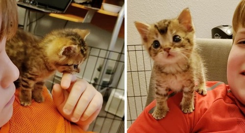 Pint-sized Kitten So Happy to Have Shoulder to Sit on After He Was Rescued