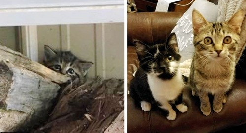 Shy Kitten Who Hid in Woodpile, Finds Courage with Help from One-eyed Cat