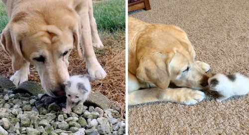 Dog Takes to Stray Kitten Who Was Found Alone on Farm