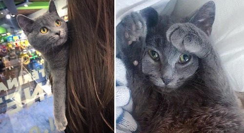 Stray Kitten Walks Up to Family's Home and Meows for Help