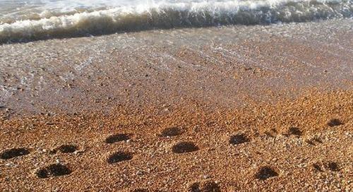 DNA Footprinting