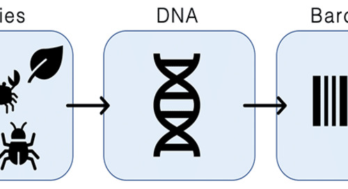 What's that Organism? Using DNA Barcoding for Species Identification