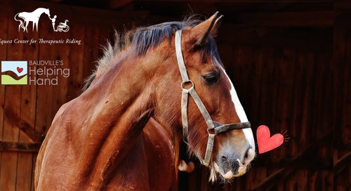 Happy Help a Horse Day: Our Ways to Give Back to Our Community