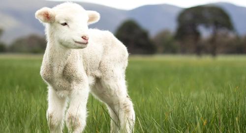 Hymn Devotions: The Lord's My Shepherd, I'll Not Want