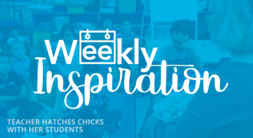 [Weekly Inspiration] This Teacher Has Hatched Chicks With Her Students For 33 Years