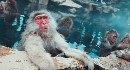 3 Ways AV Brings Your Zoo or Aquarium into the Digital Age