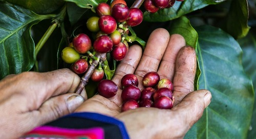 Starbucks raises $500 million to focus on supply chain sustainability