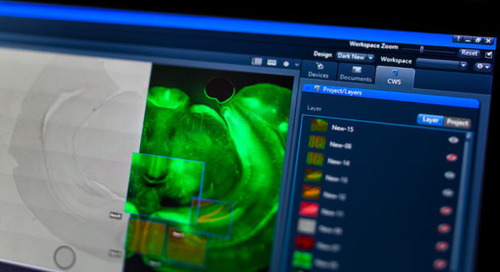 Connecting information across dimensions with the new ZEISS ZEN Connect imaging software