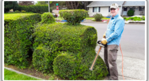 Retired shipbuilder's topiary talent delights for decades
