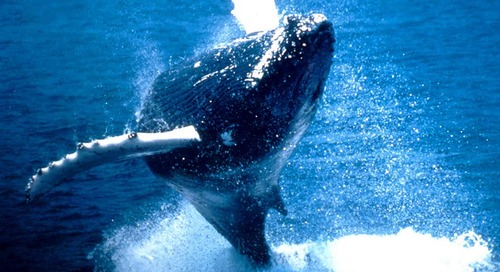 Whale Watching Discounts in Boston