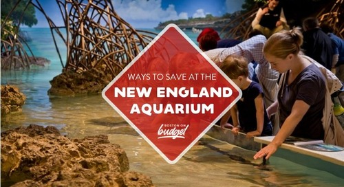 Ways to Save at the New England Aquarium