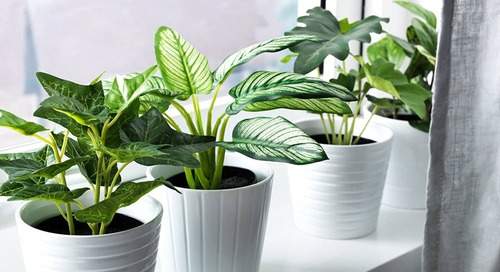 Fool Your Friends With These Faux Houseplant Tips