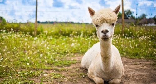 Stay at This Airbnb-Slash-Alpaca Farm for Under $75 per Night