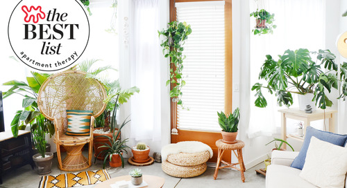 The Very Best Indoor House Plants You Can Buy — The Best List