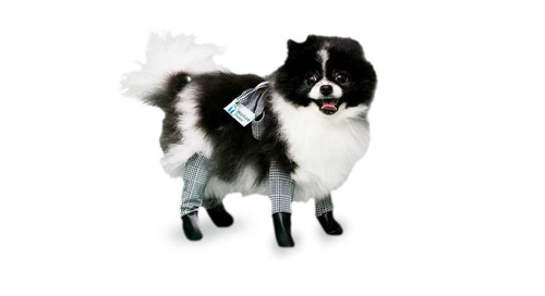 You Can Buy Your Dog Leggings to Keep Them Warm All Winter Long
