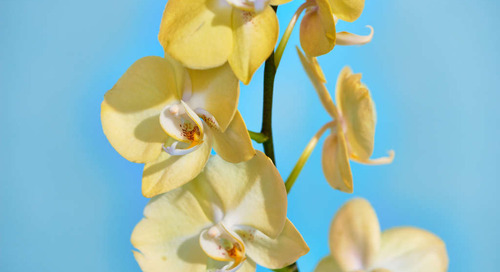 How to Keep Your Orchid Alive Longer Than a Week
