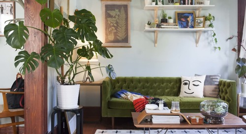 4 Surprising Plants That Can Thrive in a Drafty Apartment