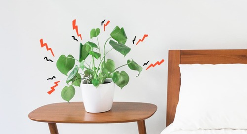 Do Plants Feel Pain? Well, Kind Of