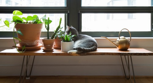 5 Pretty Plants That Are Safe for Cats