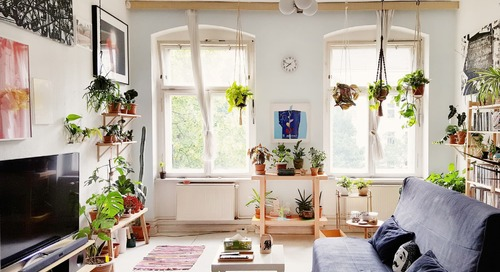 7 Plants You Can Buy on Amazon to Make Your Winter a Little Greener