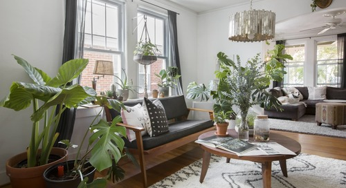 How Not to Kill Your Houseplants, According to Botanists