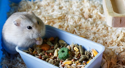 Someone Has Built Luxury Homes for Hamsters