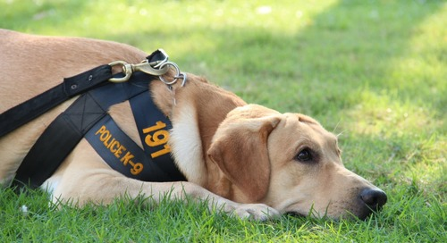 Here's How To Adopt a Retired Police Dog