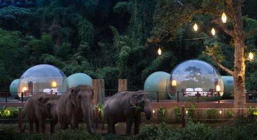 You Can Sleep Alongside Elephants in Thailand's Jungle Bubbles