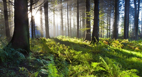 Ireland Plans to Plant 440 Million Trees By 2040 to Fight Climate Change