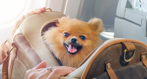 Airlines Might Be Changing Support Animal Rules Soon—Here's What You Need to Know