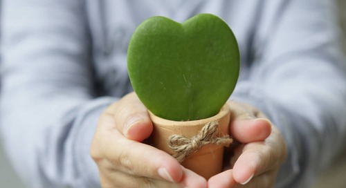 You Can Buy a Loved One (Or Yourself) a Heart-Shaped Succulent on Amazon