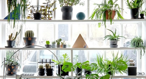 6 Houseplants That Are a Little Weird, but You'll Want To Have Anyway