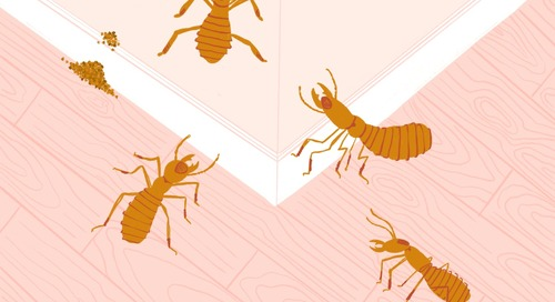 Here's How to Get Rid of Termites (Hint: You're Probably Not DIY-ing This Gross Job)