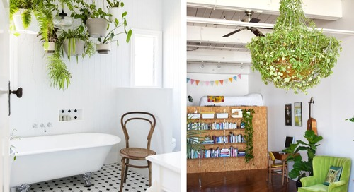 53 of Our Favorite Plant Displaying Ideas of All Time
