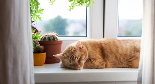 This Cactus-Shaped Cat Scratching Post Is Exactly Why We Have Etsy
