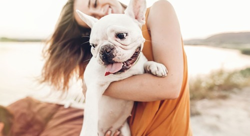 10 Dog Products That Make Pet Parenting a Breeze